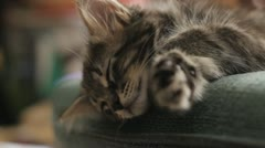 Stock Footage - Kitten young kitten sleeping on chair - close up Stock Footage