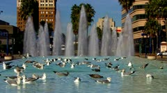 Downtown Long Beach Fountain Seagulls Fly Away Stock Footage