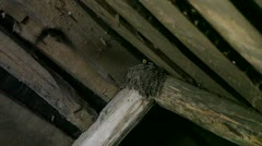 the swallow feeds baby birds in a nest - stock footage