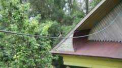 The swallow on a wire chirps Stock Footage