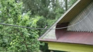 Stock Video Footage of the swallow on a wire chirps