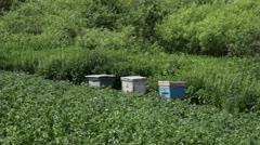 Three beehives Stock Footage