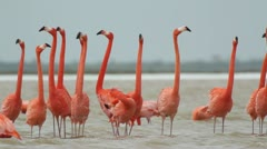 pink flamingo wild life mexico birds - stock footage