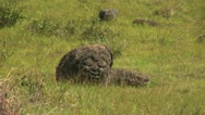 Easter Island Orongo petroglyph face on boulder 3 Stock Footage