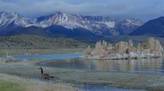 Mono Lake Stock Footage