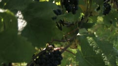 Wine Stock Footage