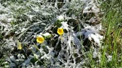 Flowers under snow Stock Footage