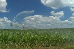 Irrigation equipment watering a corn field Stock Footage