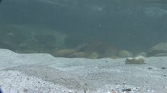 Under Water Fall Leaves Clear Mountain Streams Stock Footage