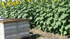 Farm crops, beehives Stock Footage