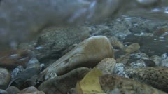 Under Water Fall Leaves Clear Mountain Streams - stock footage