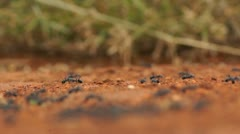 Ants swarm rack Stock Footage
