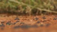 Ants swarm rack Stock Footage