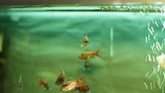 Fish in the aquarium Stock Footage