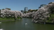 Beautiful Cherry Blossom, Chidorigafuchi in Tokyo, Japan, Imperial Palace Area Stock Footage
