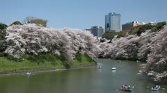 Chidorigafuchi in Tokyo, Japan, Beautiful Cherry Blossom, Imperial Palace Area Stock Footage
