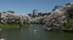 Chidorigafuchi in Tokyo, Japan, Imperial Palace Area, Beautiful Cherry Blossom Stock Footage