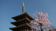 Sensoji Buddhist Temple Tokyo, Japan, Asakusa Kannon Temple, Cherry Tree Blossom Stock Footage