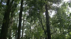 Rainforest Understory Stock Footage