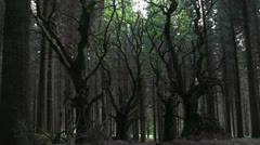 Sitka spruce forest on the Brown Clee, Shropshire, England Stock Footage