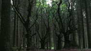 Stock Video Footage of Sitka spruce forest on the Brown Clee, Shropshire, England