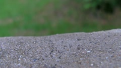 Stock Video Footage of Time-lapse of a Snail Moving Along the Cement