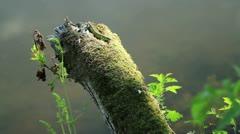 Green Lizard Stock Footage