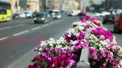 Flower bed at dividing strip on road with city traffic Stock Footage