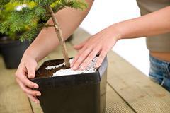 gardening - female hands take care of bonsai tree - stock photo