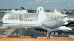 Gull sits on handrail in port with cruise liner at sunny day Stock Footage