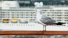 Mew sits on handrail in port with cruise ship at sunny day Stock Footage