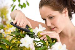gardening - woman cutting flower with pruning shears - stock photo