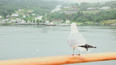 Gull sits on handrail and then flies away at fiord with village - stock footage
