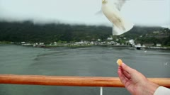 Hand hold piece of bread and gull flies to take it near village Stock Footage