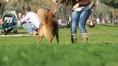 Playing dog Stock Footage