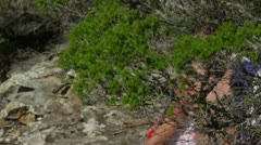Young man walking/hiking across rocks on coast, Australia Stock Footage