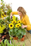 gardening - woman sprinkling water to sunflowers - stock photo