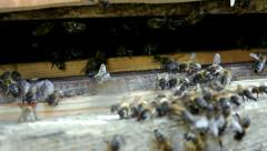Bees Close Up Stock Footage
