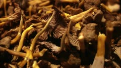'Funnel'' chanterelle Stock Footage