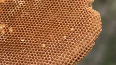 Bee's structure in nature - stock footage