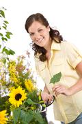 gardening - woman with sunflower and pruning shears - stock photo