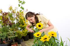 Stock Photo of gardening - woman cutting sunflowers and plants