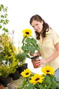 gardening -  woman holding flower pot with sunflower - stock photo