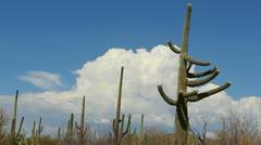 Arizona Saguaro Landscape Time Lapse - stock footage