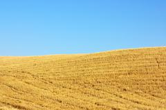Texture of the stubble field in portugal Stock Photos