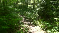 Stock Video Footage of Walking Along Woodland Path