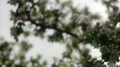 Apple-tree against the light Stock Footage