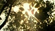 Sun Rays Beaming through Trees (HD) Stock Footage