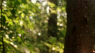 Stock Video Footage of Split Tree Limb/Branch Close Up (HD)