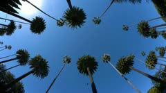 Stock Video Footage of Palm trees drive. Beverly Hills, Los Angeles.